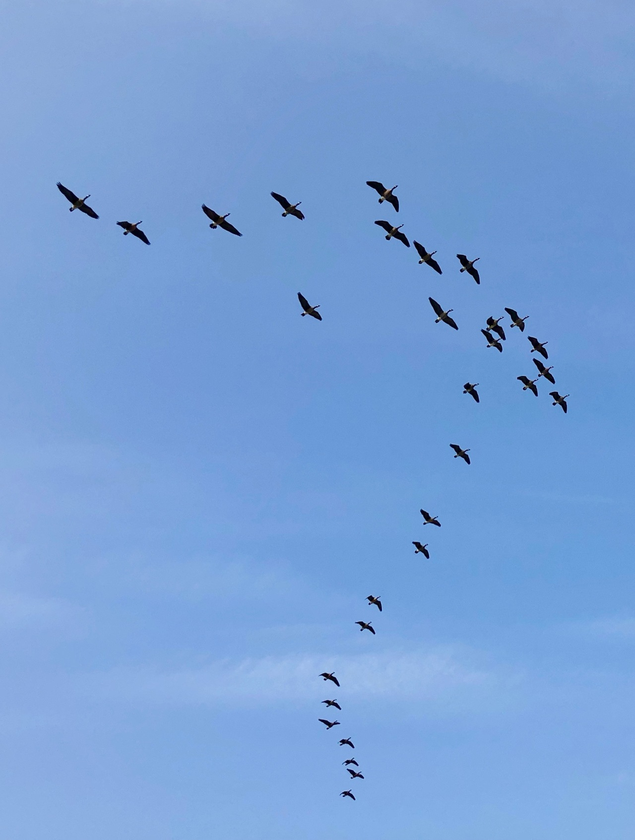 after Wild Geese