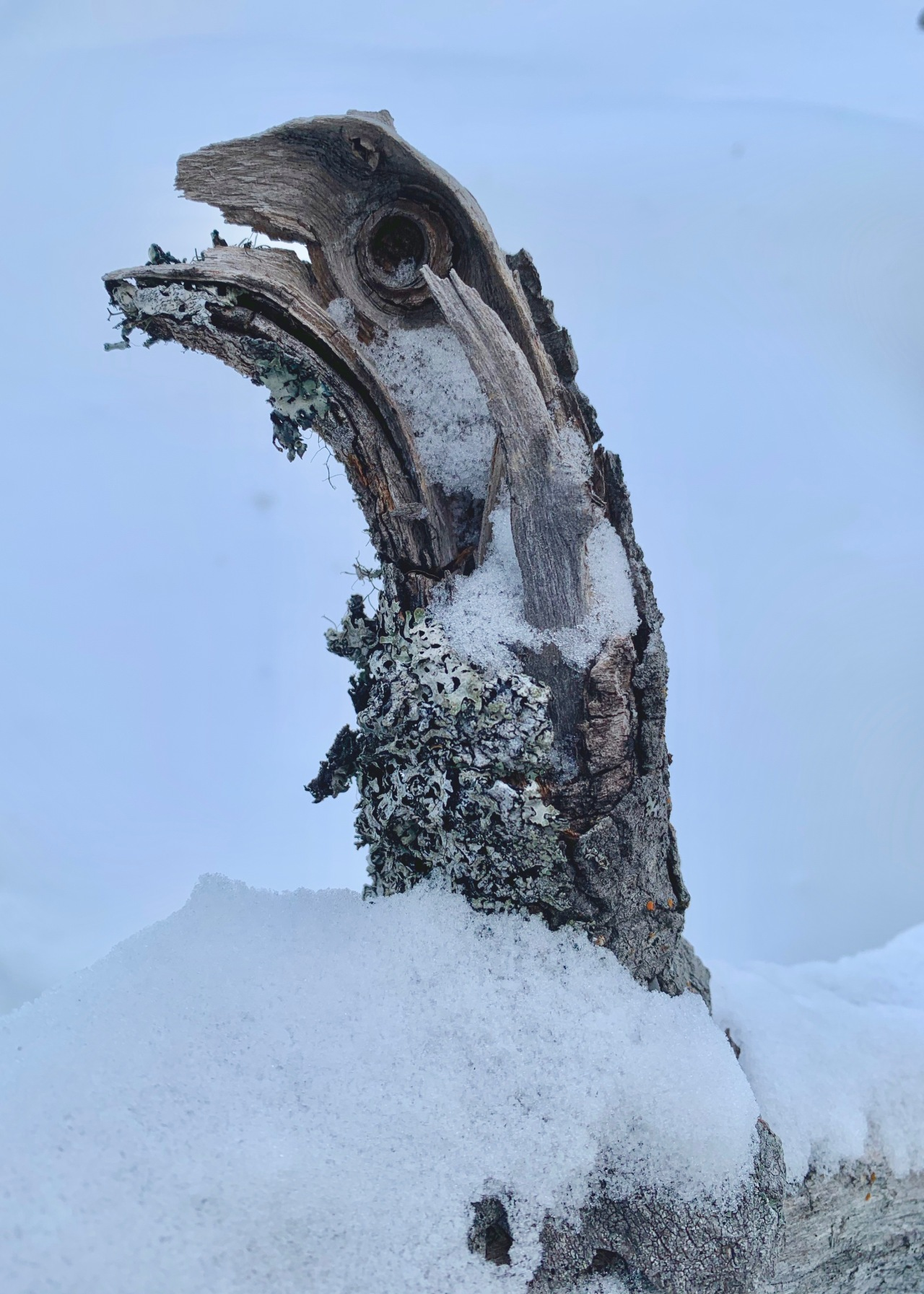 Tree Mink